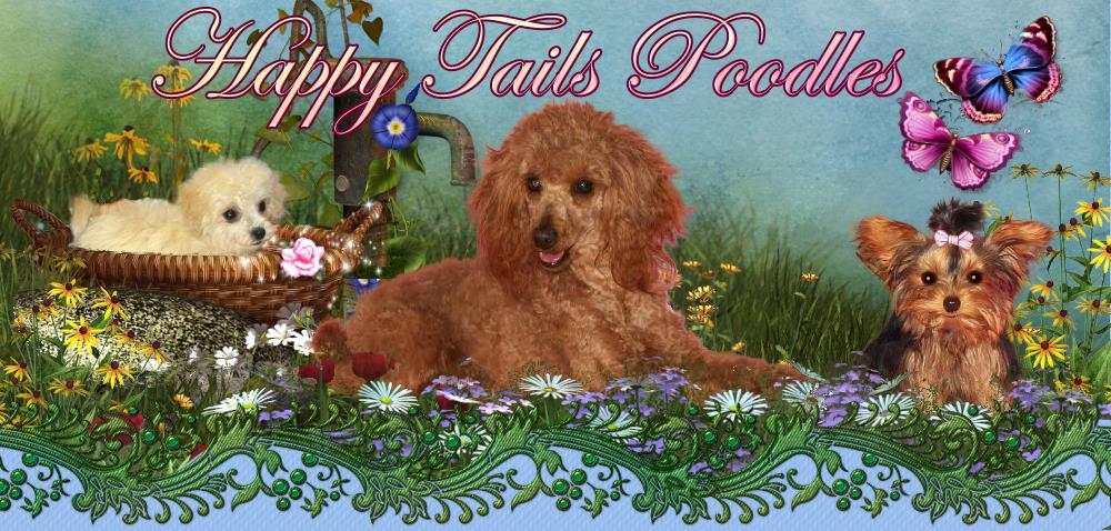 Happy Tails Poodles Puppies, grooming boarding available