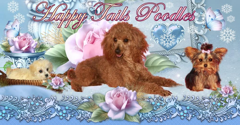 Arndts Happy Tails Poodles Yorkshire Terriers Pennsylvania